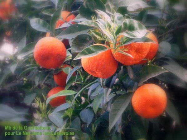 Orangers Amers