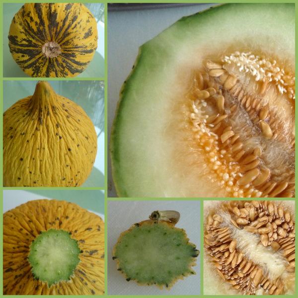 Melon de Thrace